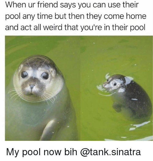 tanked: When ur friend says you can use their  pool any time but then they come home  and act all weird that you're in their pool My pool now bih @tank.sinatra