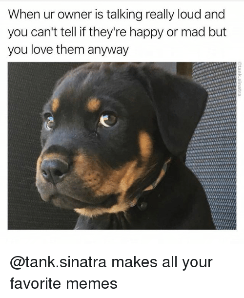 madding: When ur owner is talking really loud and  you can't tell if they're happy or mad but  you love them anyway @tank.sinatra makes all your favorite memes
