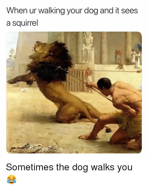 Memes, Squirrel, and 🤖: When ur walking your dog and it sees  a squirrel Sometimes the dog walks you 😂