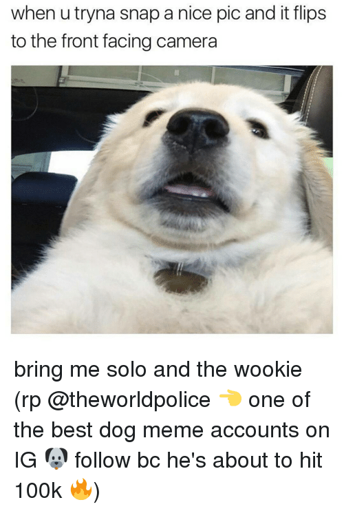 Dog Meme: when utryna snap a nice pic and it flips  to the front facing camera bring me solo and the wookie (rp @theworldpolice 👈 one of the best dog meme accounts on IG 🐶 follow bc he's about to hit 100k 🔥)