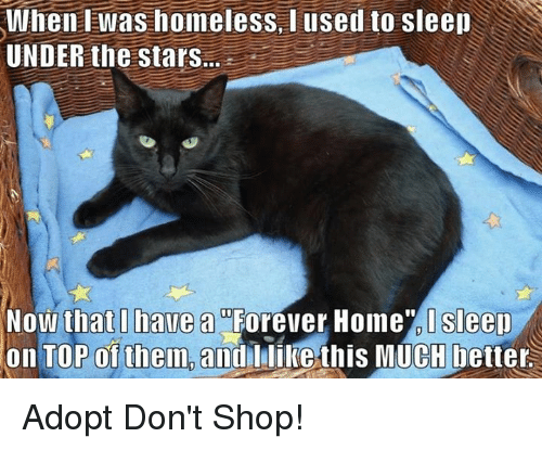 Homeless, Memes, and 🤖: When was homeless used to sleep  UNDER the Stars...  Now that I have a Forever Home Sleep  on TOP of them and I like this MUCH better Adopt Don't Shop!