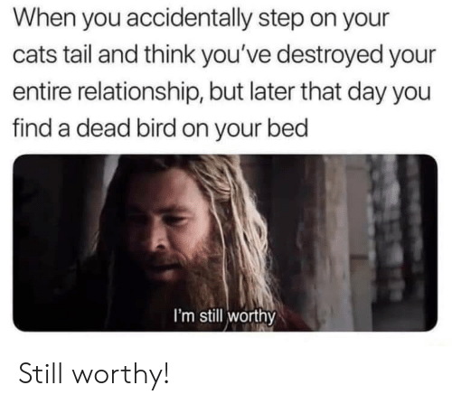 Cats, Step, and Day: When you accidentally step on your  cats tail and think you've destroyed your  entire relationship, but later that day you  find a dead bird on your bed  I'm still worthy Still worthy!