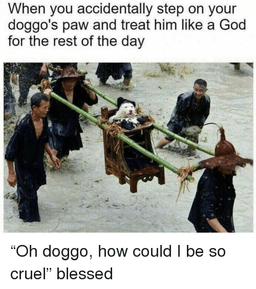 """Blessed, God, and Memes: When you accidentally step on your  doggo's paw and treat him like a God  for the rest of the day """"Oh doggo, how could I be so cruel"""" blessed"""