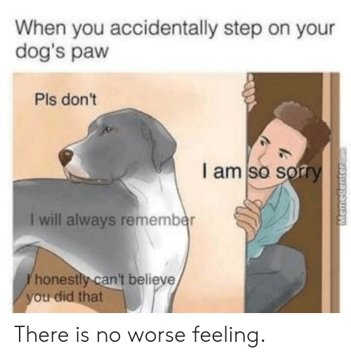 I Am So Sorry: When you accidentally step on your  dog's paw  Pls don't  I am so sorry  I will always remember  honestly can't believe There is no worse feeling.