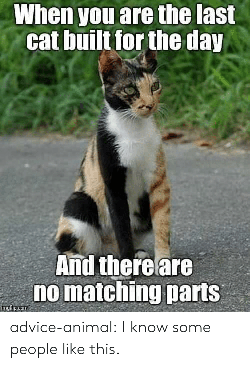 Advice, Tumblr, and Animal: When you are the last  cat built for the day  And thereare  no matching parts  mglip.com advice-animal:  I know some people like this.