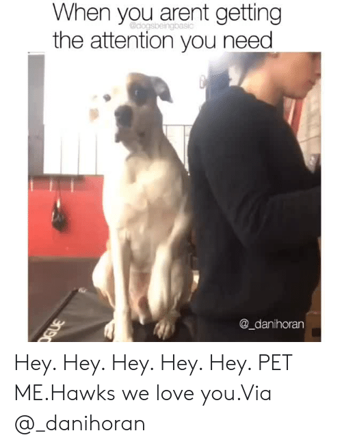 Instagram, Love, and Target: When you arent getting  the attention you need  @_danihoran Hey. Hey. Hey. Hey. Hey. PET ME.Hawks we love you.Via @_danihoran