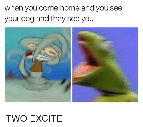 Excite: when you come home and you see  your dog and they see you TWO EXCITE