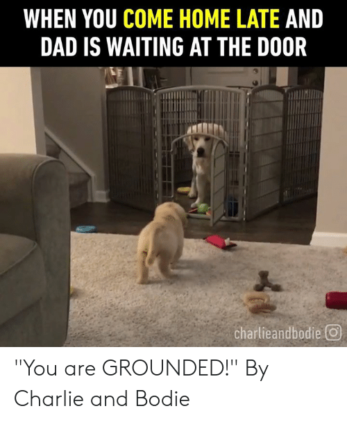 """Charlie, Dad, and Dank: WHEN YOU COME HOME LATE AND  DAD IS WAITING AT THE DOOR  charlieandbodie回 """"You are GROUNDED!""""  By Charlie and Bodie"""