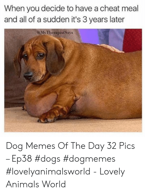 Animals, Dogs, and Memes: When you decide to have a cheat meal  and all of a sudden it's 3 years later  @ MyTherapistSays  lvl Dog Memes Of The Day 32 Pics – Ep38 #dogs #dogmemes #lovelyanimalsworld - Lovely Animals World