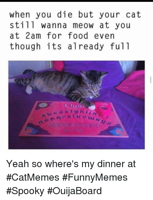 My Dinner: when you die but your cat  still wanna meow at you  at 2am for food evern  though its already ful1 Yeah so where's my dinner at #CatMemes #FunnyMemes #Spooky #OuijaBoard