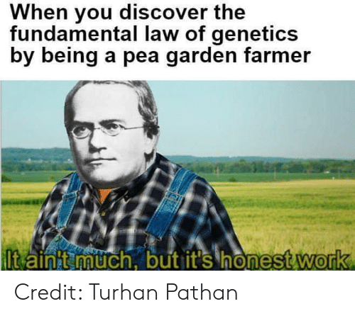 fundamental: When you discover the  fundamental law of genetics  by being a pea garden farmer  lt ainit uch. but it's honestWorrk  onest work  0 Credit: Turhan Pathan
