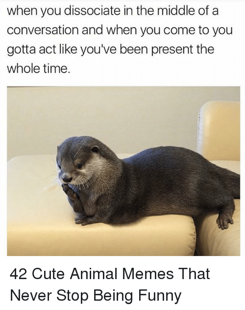 Cute, Funny, and Memes: when you dissociate in the middle of a  conversation and when you come to you  gotta act like you've been present the  whole time 42 Cute Animal Memes That Never Stop Being Funny