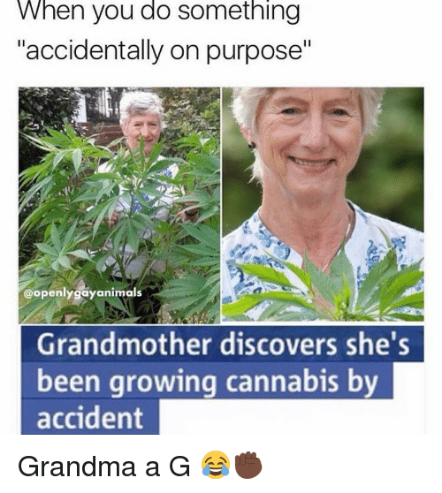 """Cannabies: When you do Something  """"accidentally on purpose""""  @openly gay animals  Grandmother discovers she  been growing cannabis by  accident Grandma a G 😂✊🏿"""