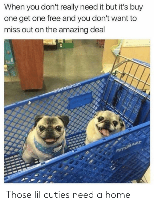 Dank, Free, and Home: When you don't really need it but it's buy  one get one free and you don't want to  miss out on the amazing deal  BetaSalmon  PET&MART Those lil cuties need a home