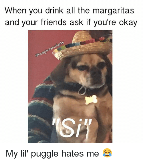 Onoes: When you drink all the margaritas  and your friends ask if you're okay  nofucks  eg  ono My lil' puggle hates me 😂