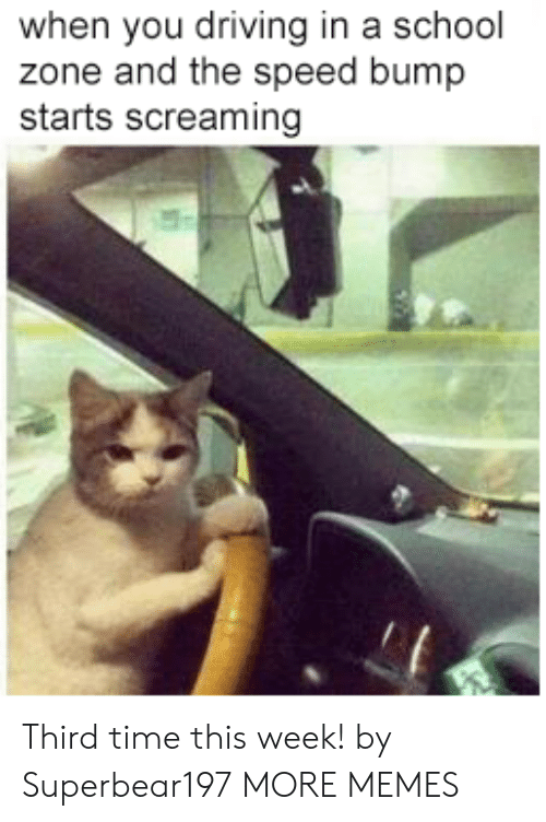 Dank, Driving, and Memes: when you driving in a school  zone and the speed bump  starts screaming Third time this week! by Superbear197 MORE MEMES