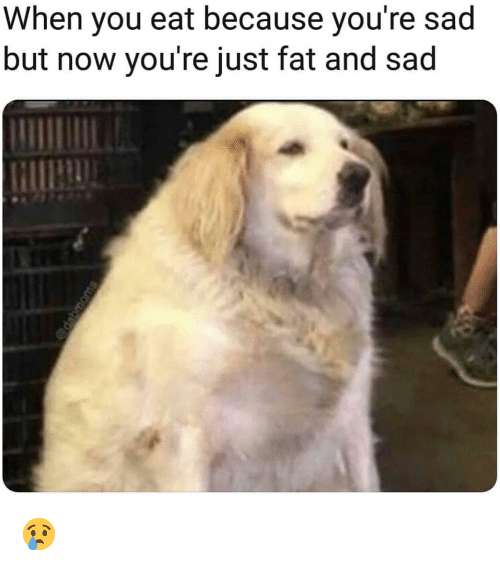 Just Fat: When you eat because you're sad  but now you're just fat and sad 😢