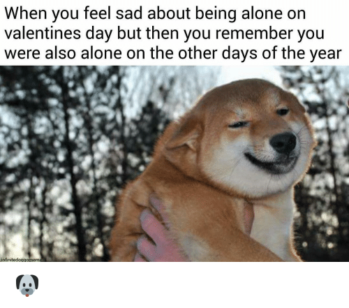 Alone On Valentines Day: When you feel sad about being alone on  valentines day but then you remember you  were also alone on the other days of the year  nfinitedoggomemes 🐶