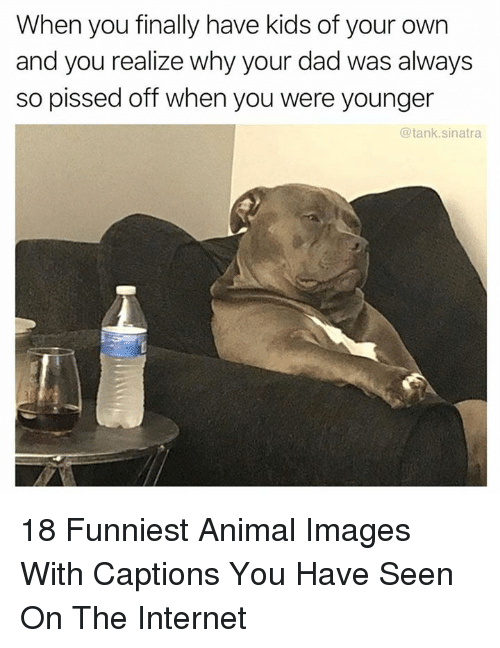 So Pissed Off: When you finally have kids of your own  and you realize why your dad was always  so pissed off when you were younger  @tank.sinatra 18 Funniest Animal Images With Captions You Have Seen On The Internet