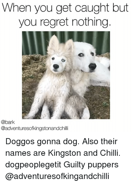 Regretment: When you get caught but  you regret nothing  @bark  @adventuresofkingstonandchilli Doggos gonna dog. Also their names are Kingston and Chilli. dogpeoplegetit Guilty puppers @adventuresofkingandchilli