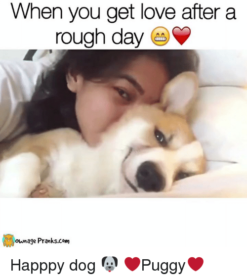 When You Get Love After a Rough Day Happpy Dog 🐶 ❤Puggy❤ | Meme
