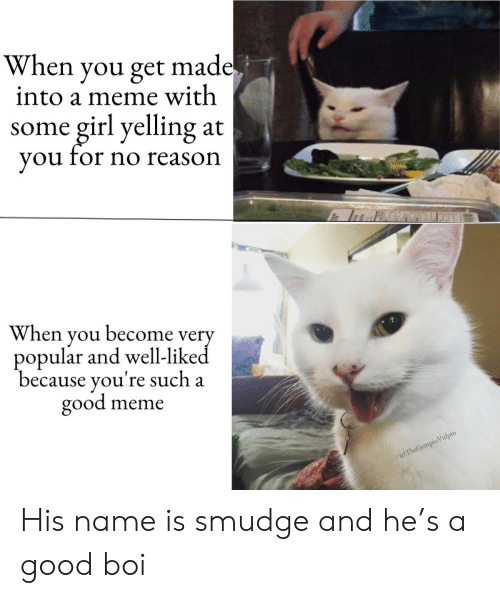 Meme With: When you get made.  into a meme with  girl yelling  you for no reason  some  at  When you become very  popular and well-liked  because you're such a  good  meme  u?TheGempio Vulpin His name is smudge and he's a good boi