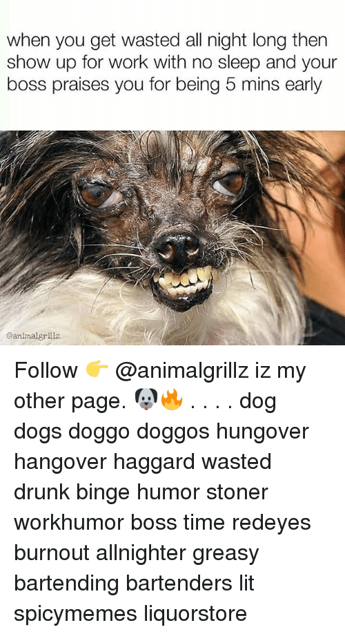 Bartenders: when you get wasted all night long then  show up for work with no sleep and your  boss praises you for being 5 mins early  @animalgrillz Follow 👉 @animalgrillz iz my other page. 🐶🔥 . . . . dog dogs doggo doggos hungover hangover haggard wasted drunk binge humor stoner workhumor boss time redeyes burnout allnighter greasy bartending bartenders lit spicymemes liquorstore