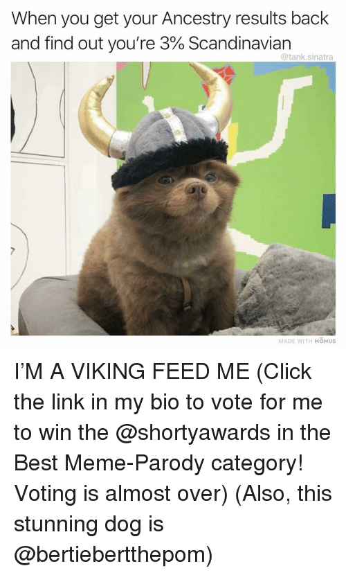 Ancestry: When you get your Ancestry results back  and find out you're 3% Scandinavian  @tank.sinatra  MADE WITH MOMUS I'M A VIKING FEED ME (Click the link in my bio to vote for me to win the @shortyawards in the Best Meme-Parody category! Voting is almost over) (Also, this stunning dog is @bertiebertthepom)