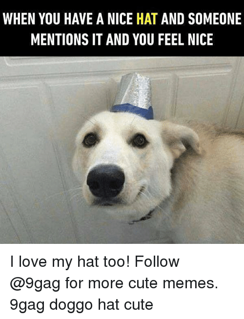 Nicee: WHEN YOU HAVE A NICE HAT AND SOMEONE  MENTIONS IT AND YOU FEEL NICE I love my hat too! Follow @9gag for more cute memes. 9gag doggo hat cute