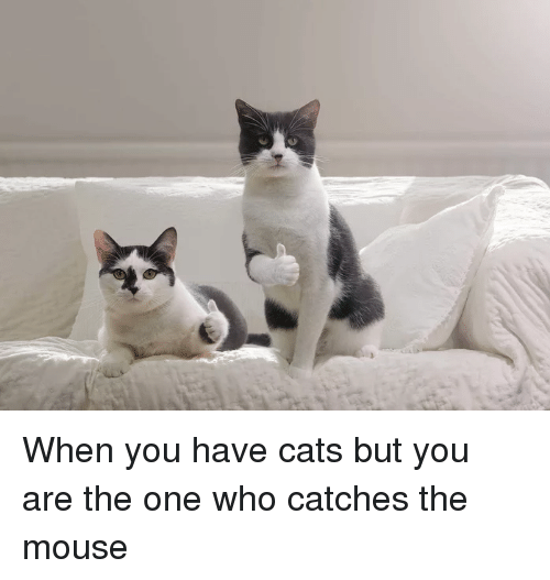 Cats, Funny, and Mouse