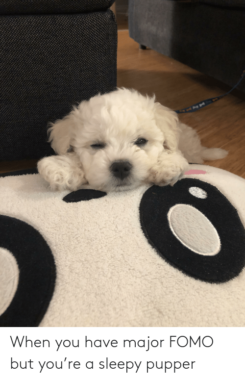 When You Have: When you have major FOMO but you're a sleepy pupper