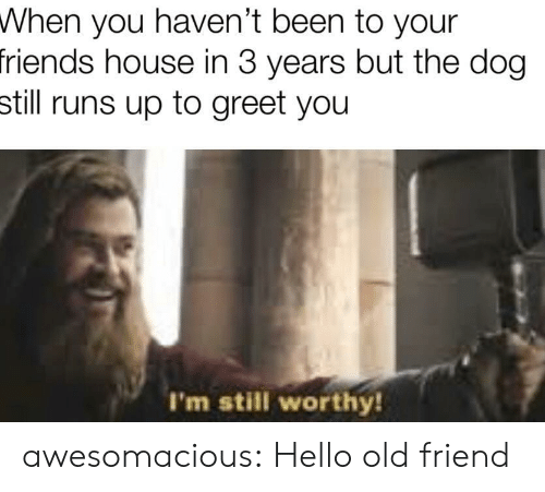 Greet: When you haven't been to your  friends house in 3 years but the dog  still runs up to greet you  I'm still worthy! awesomacious:  Hello old friend
