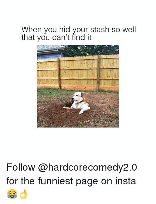 Stashe: When you hid your stash so well  that you can't find it  that you can' find ittasn so Wel Follow @hardcorecomedy2.0 for the funniest page on insta 😂👌