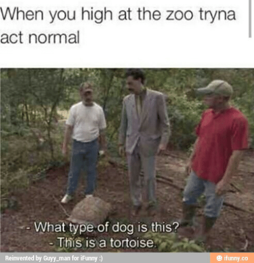 Zoo, Dog, and Act: When you high at the zoo tryna  act normal  What type of dog is this?  This is a tortoise  ifunny.co  Reinvented by Guyy_man for iFunny :)