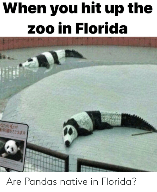 pandas: When you hit up the  zoo in Florida Are Pandas native in Florida?