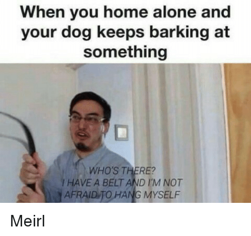 Being Alone, Home Alone, and Home: When you home alone and  your dog keeps barking at  something  WHO'S THERE?  / HAVE A BELT AND I'M NOT  AFRAID TO HANG MYSELF Meirl
