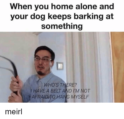 Being Alone, Home Alone, and Home: When you home alone and  your dog keeps barking at  something  WHO'S THERE?  I HAVE A BELT AND I'M NOT  AFRAID TO HANG MYSELF meirl