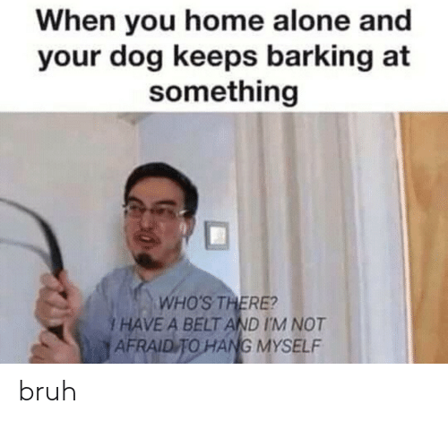 Being Alone, Bruh, and Home Alone: When you home alone and  your dog keeps barking at  something  WHO'S THERE?  I HAVE A BELT AND I'M NOT  AFRAID TO HANG MYSELF bruh