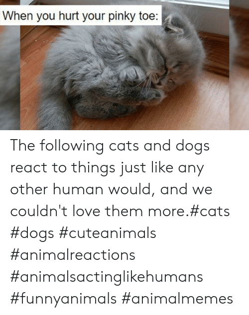The Following: When you hurt your pinky toe: The following cats and dogs react to things just like any other human would, and we couldn't love them more.#cats #dogs #cuteanimals #animalreactions #animalsactinglikehumans #funnyanimals #animalmemes