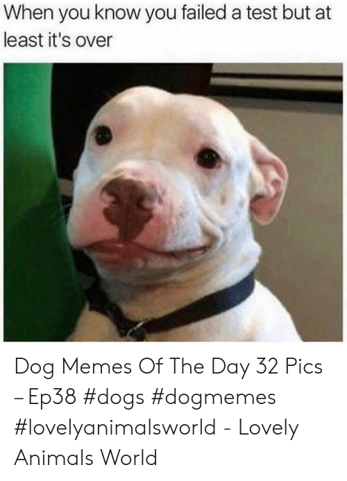 You Failed: When you know you failed a test but at  least it's over Dog Memes Of The Day 32 Pics – Ep38 #dogs #dogmemes #lovelyanimalsworld - Lovely Animals World