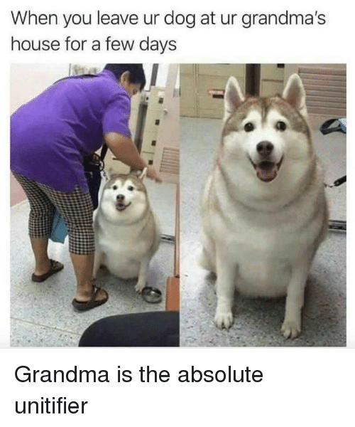 Grandma, House, and Dog: When you leave ur dog at ur grandma's  house for a few davs Grandma is the absolute unitifier