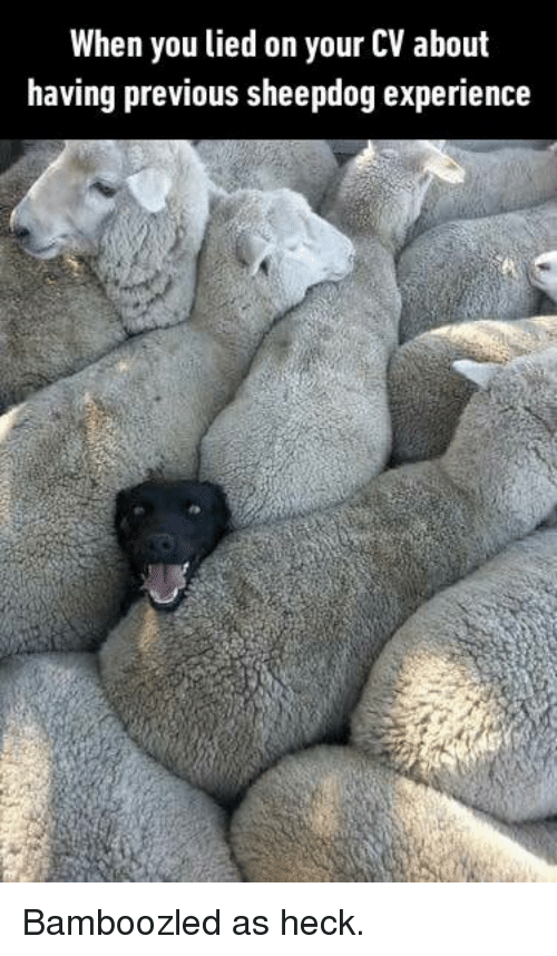 sheepdog: When you lied on your CV about  having previous sheepdog experience Bamboozled as heck.