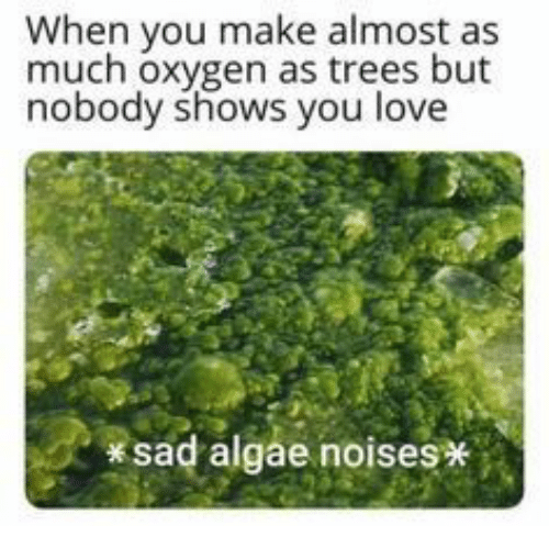 Love, Oxygen, and Trees: When you make almost as  much oxygen as trees but  nobody shows you love  sad algae noises