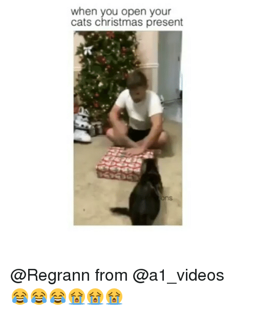 cats christmas and memes when you open your cats christmas present regrann - When Do You Open Christmas Presents