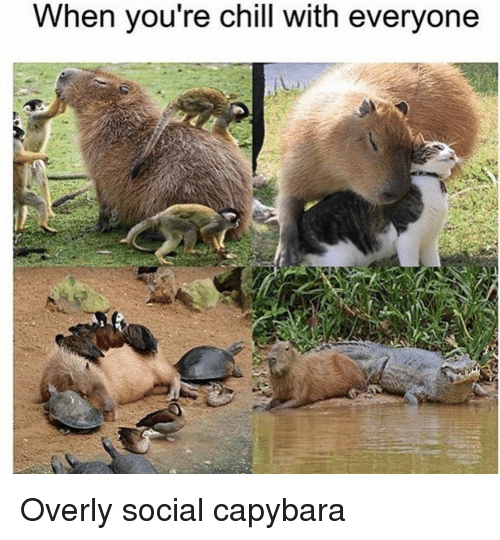 Chill, Capybara, and You: When you re chill with everyone Overly social capybara