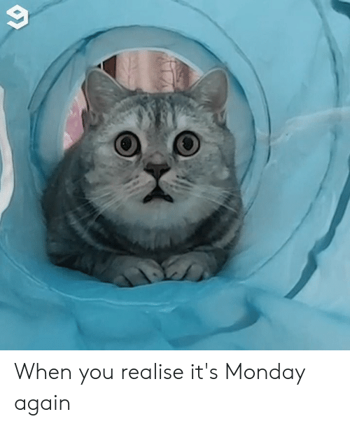 Dank, Monday, and 🤖: When you realise it's Monday again