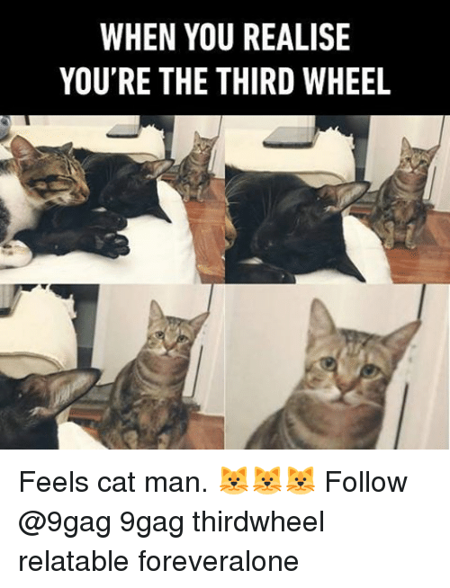 Third Wheels: WHEN YOU REALISE  YOU'RE THE THIRD WHEEL Feels cat man. 🐱🐱🐱 Follow @9gag 9gag thirdwheel relatable foreveralone