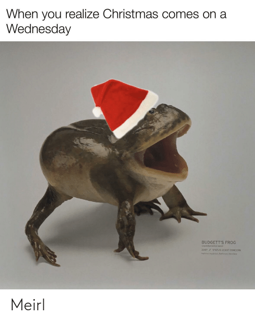 Christmas, Wednesday, and MeIRL: When you realize Christmas comes on a  Wednesday  BUDGETT'S FROG  Lepidobatach ueva  2007 STATUS LEAST CONCERN  Na Aguir, Butin Mert Meirl