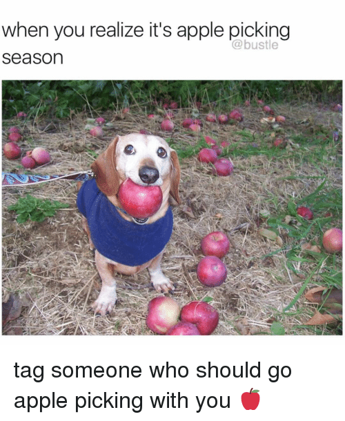 Apple, Memes, and Tag Someone: when you realize it's apple picking  @bustle  Season tag someone who should go apple picking with you 🍎