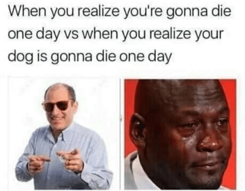 Dog, One, and One Day: When you realize you're gonna die  one day vs when you realize your  dog is gonna die one day